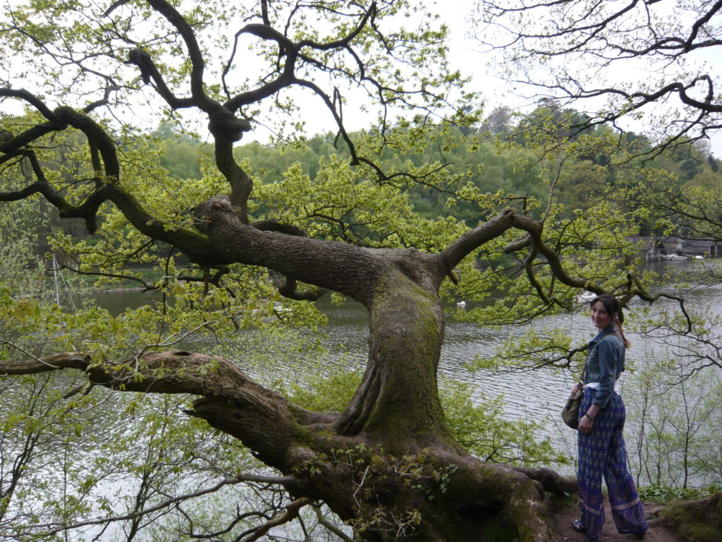 Dance by the Lake Rudyard Lake Tree