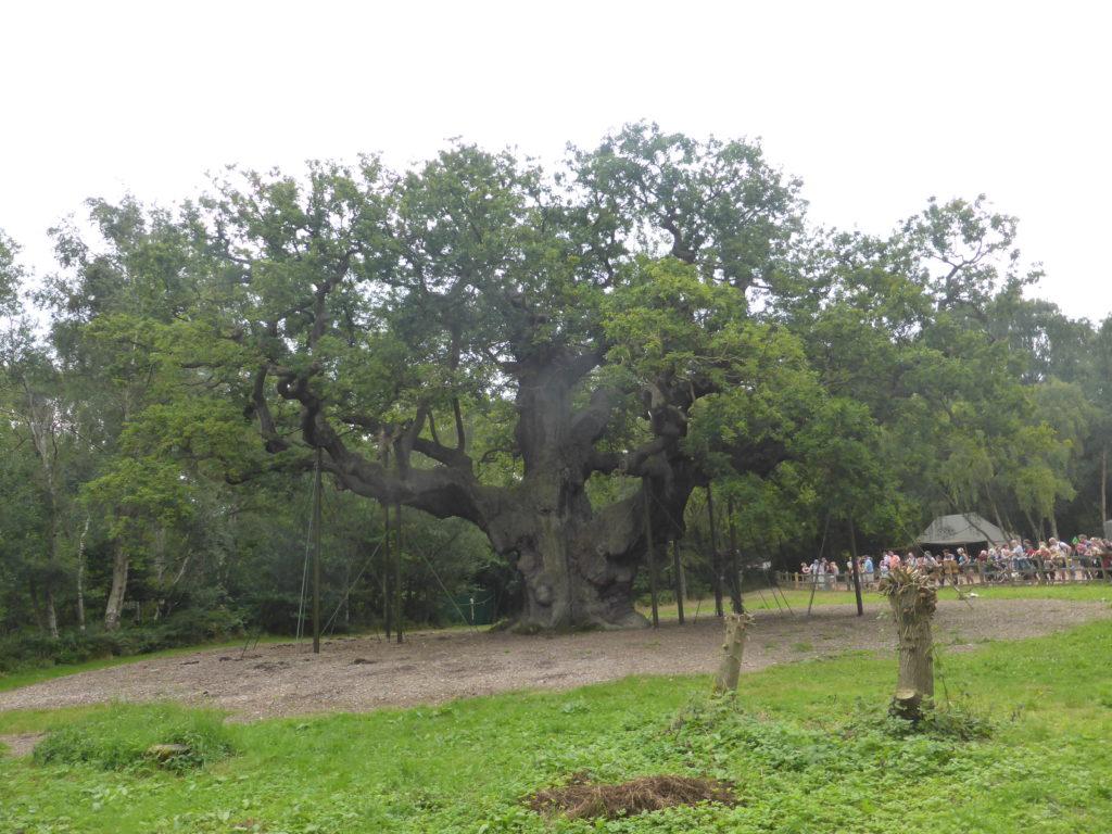 Romantic Nottingham Major Oak Sherwood Forest