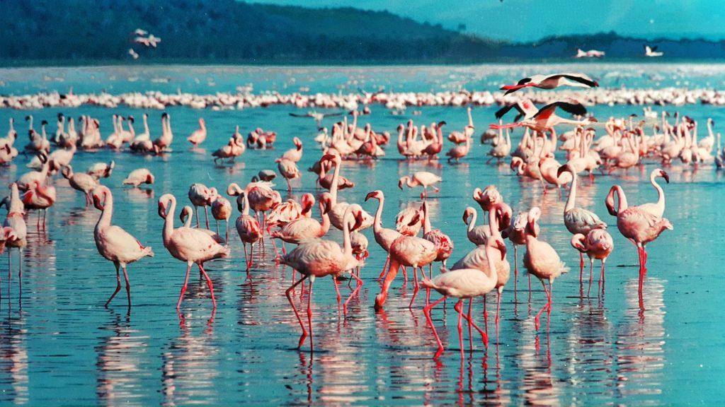 Best Lakes Dance Lake Nakuru