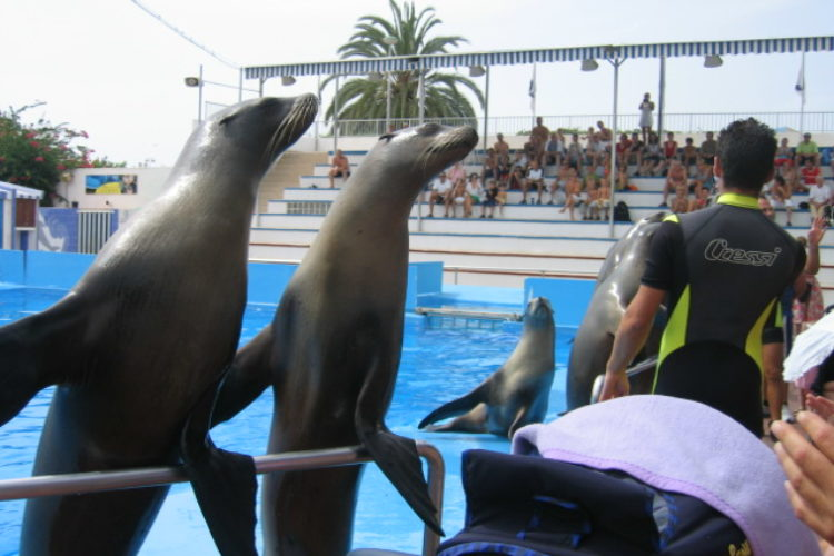 Romantic Majorca Marineland