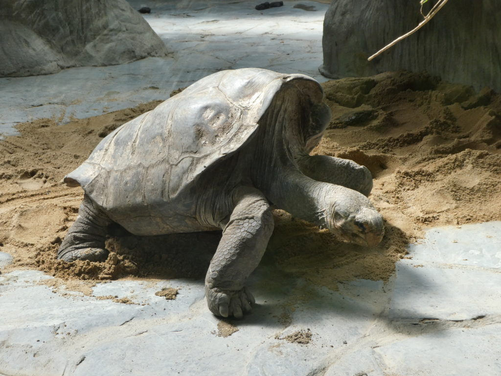 Prague Zoo Czech Republic - Giant Tortoise