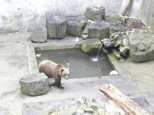 Cesky Krumlov Czech Republic - Bear Moat