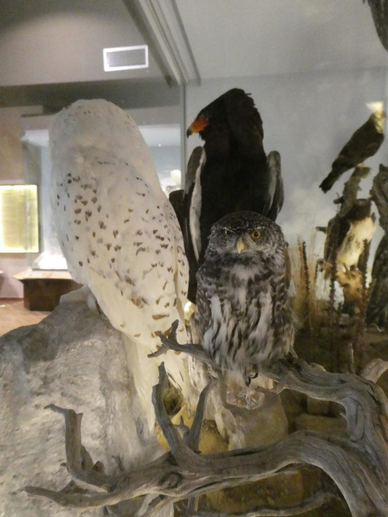 Natural History Museum of Meteora and Mushroom Museum - Meteora, Greece