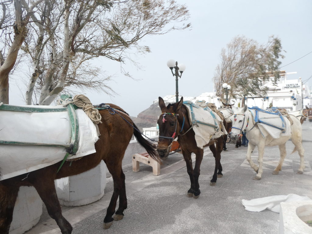 16 Tips for Hiking between Fira and Oia, Santorini, Greece, donkeys