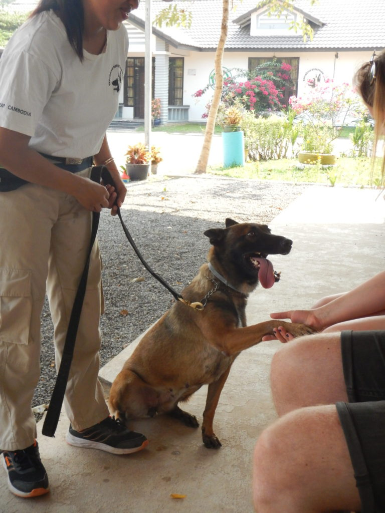 The Wonder Dogs of Siem Reap, NPA Explosive Dectection Dogs, Cambodia